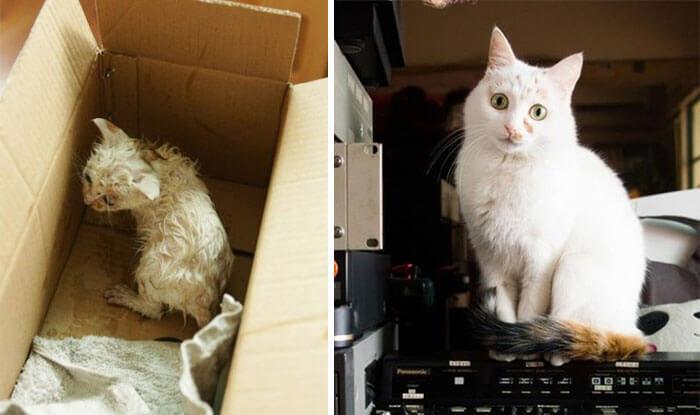 gatos rescatados 9