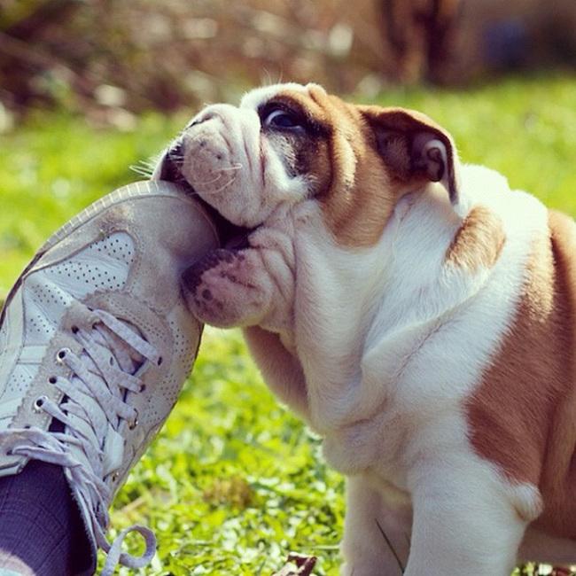 lecciones de perros10
