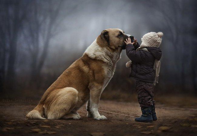 lecciones de perros11