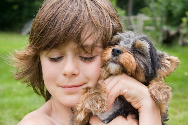 lecciones de perros13
