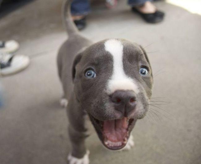 lecciones de perros15