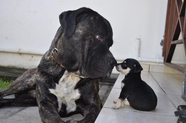 15 importantes lecciones que debemos aprender de los perros