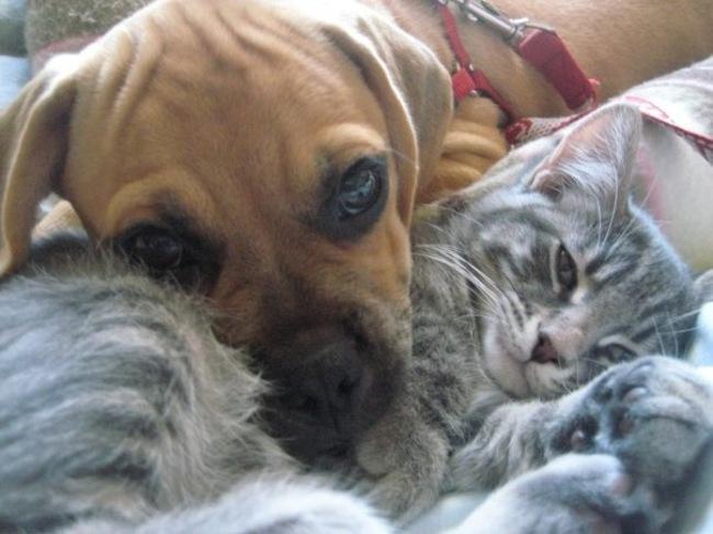 lecciones de perros8