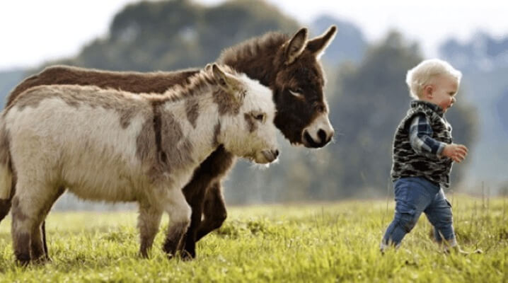 mini-burros