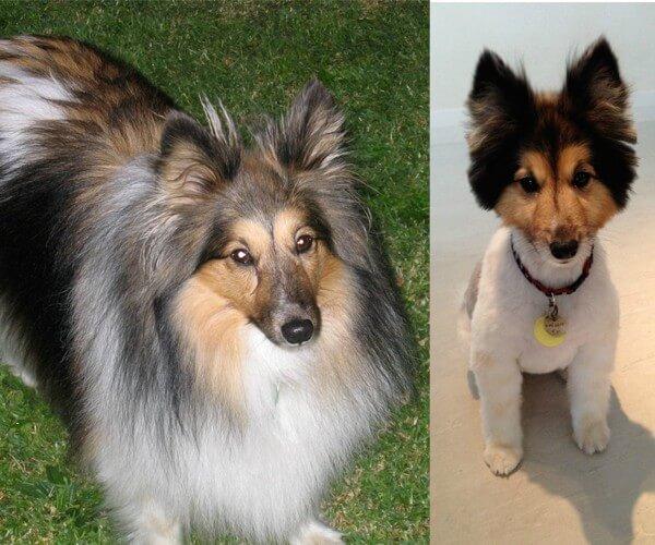 Adorables Cambios Radicales De Perros Antes Y Despu 233 S De