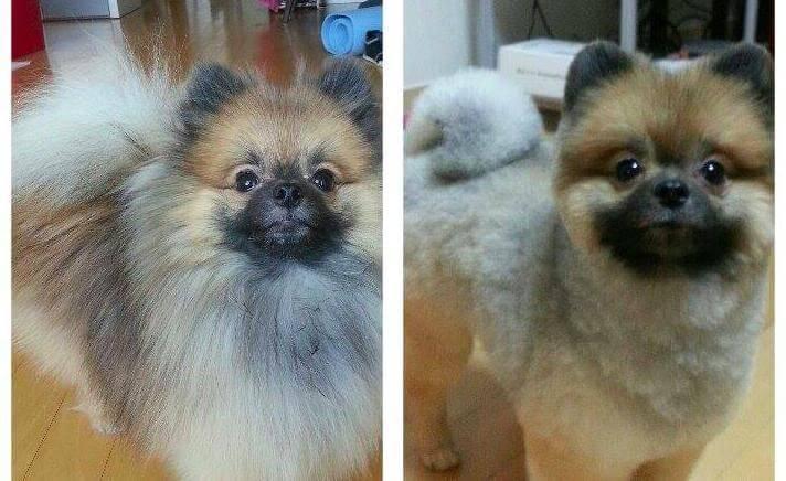 perros corte de pelo 5