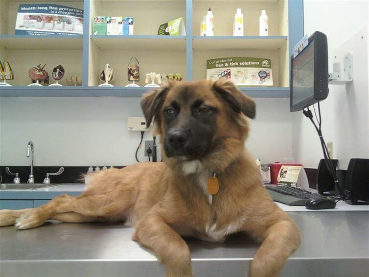 perros_veterinario_14