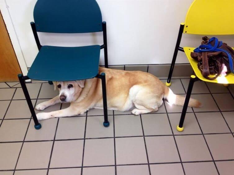 perros_veterinario_15