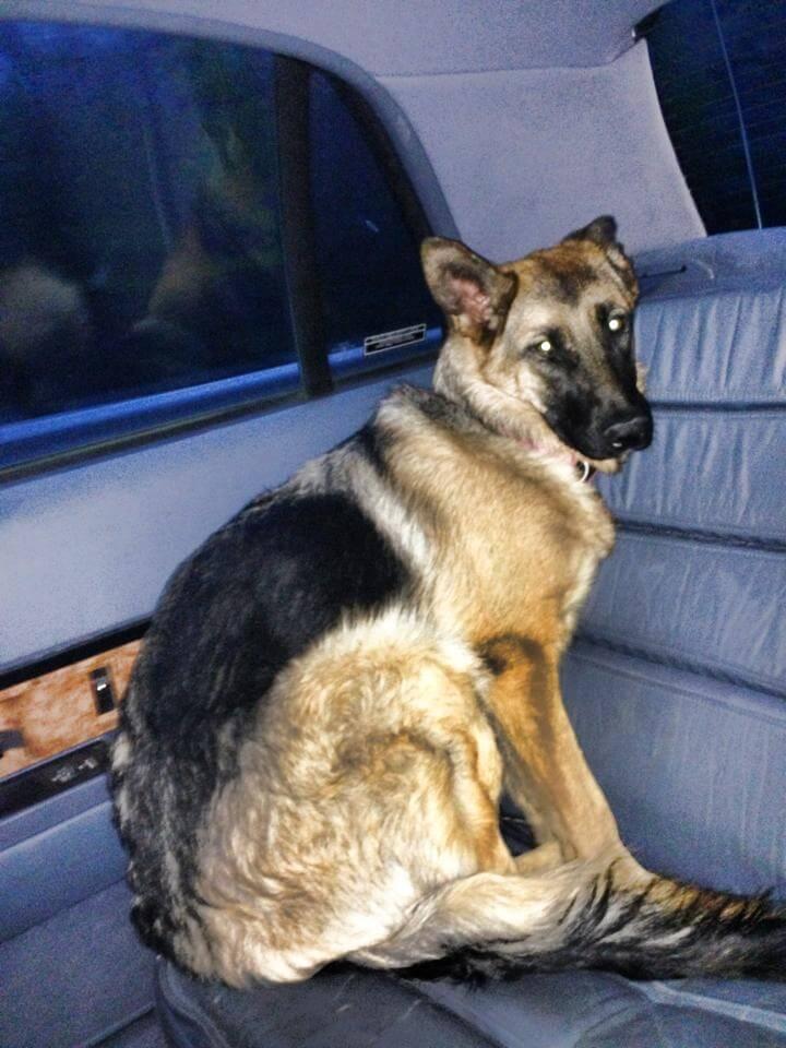 perros_veterinario_16