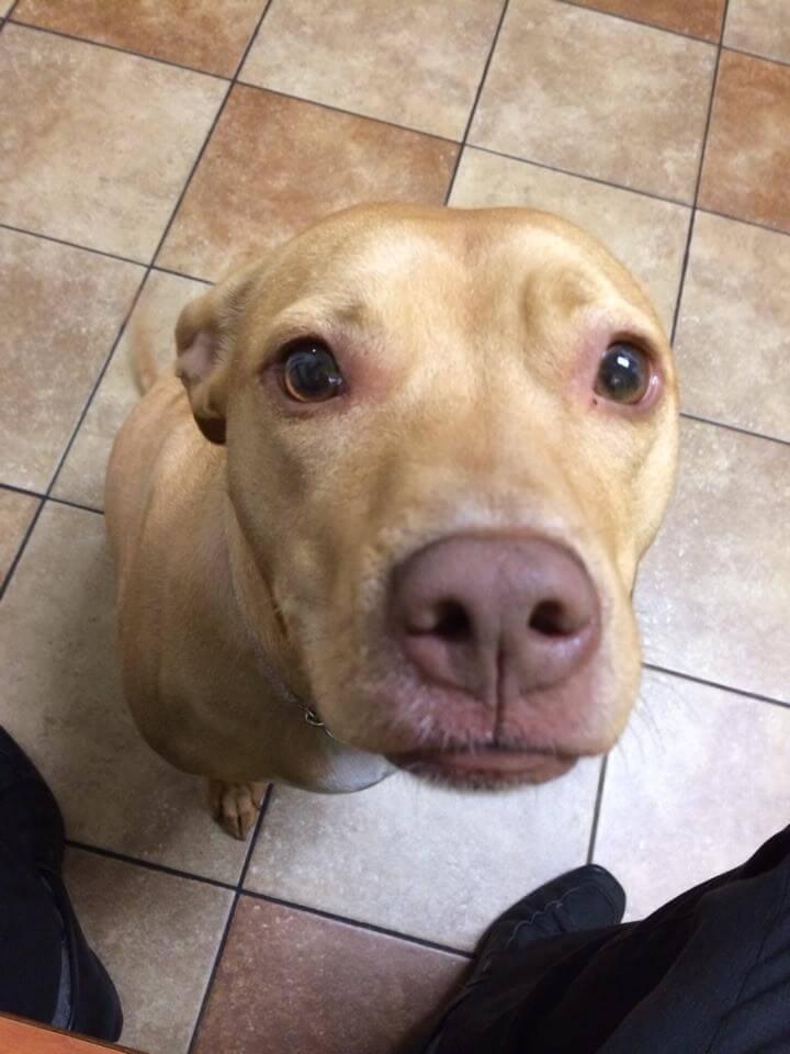 perros_veterinario_4