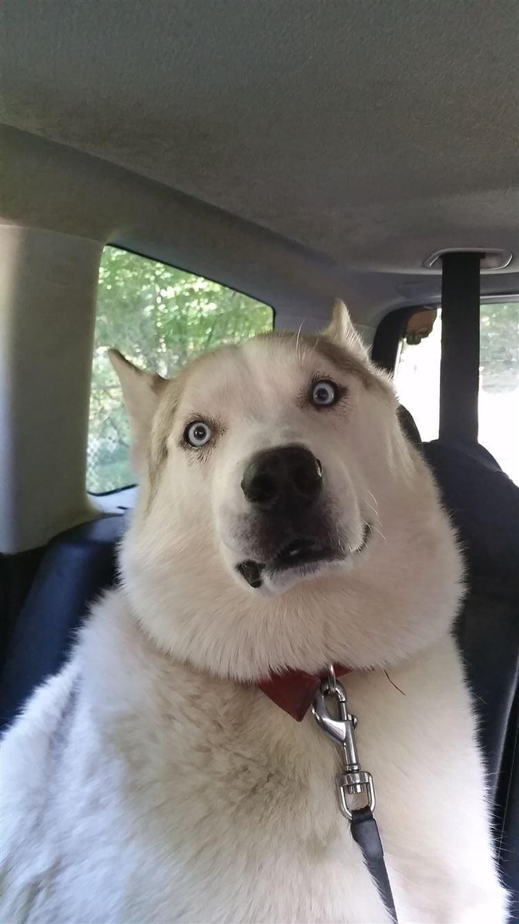 perros_veterinario_6
