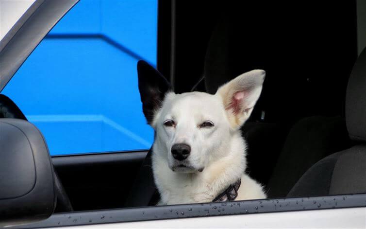 perros_veterinario_8