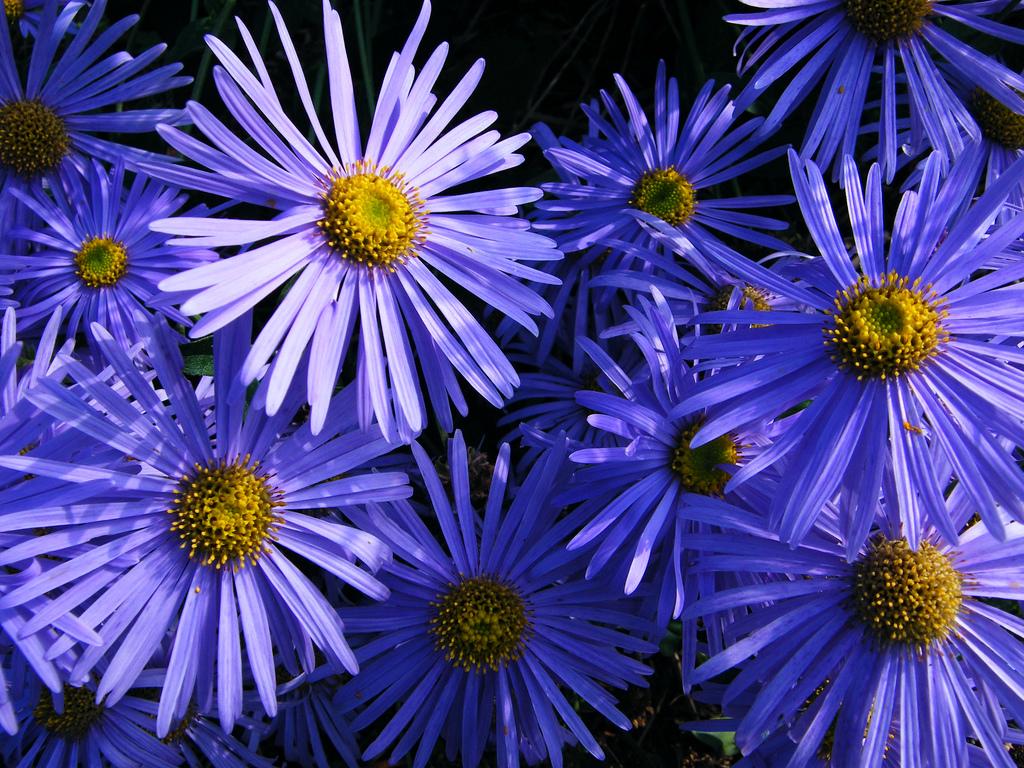 plantas_abejas_18