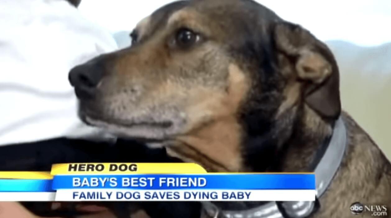 salva-vida-bebe-perro