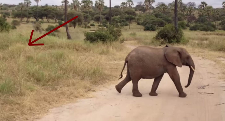 sorpresa-elefantes