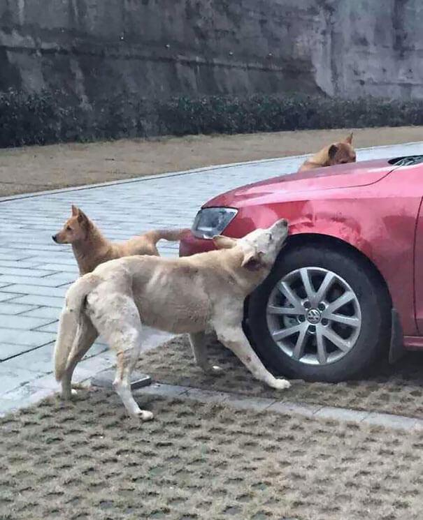 venganza perro 1