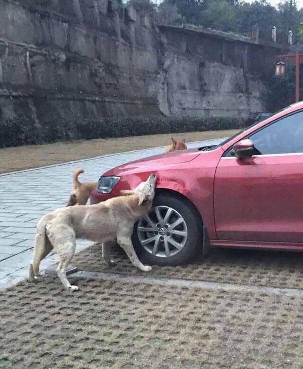 venganza perro 2