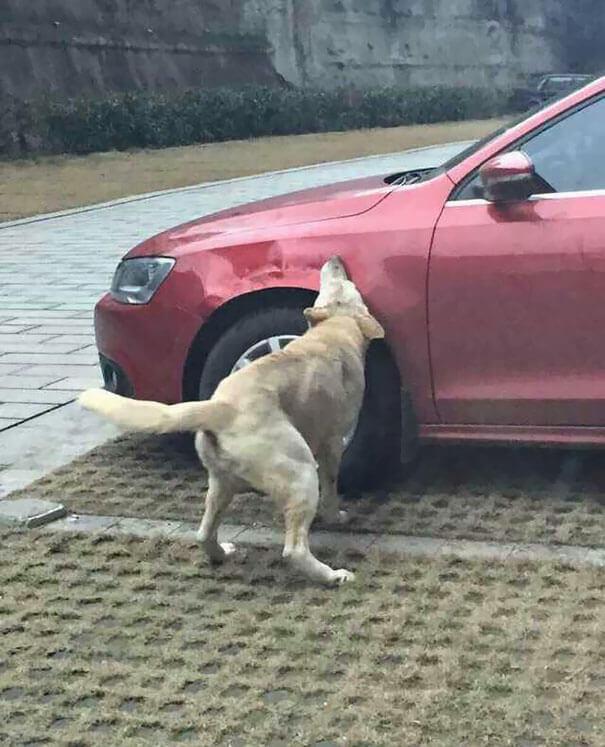 venganza perro 4