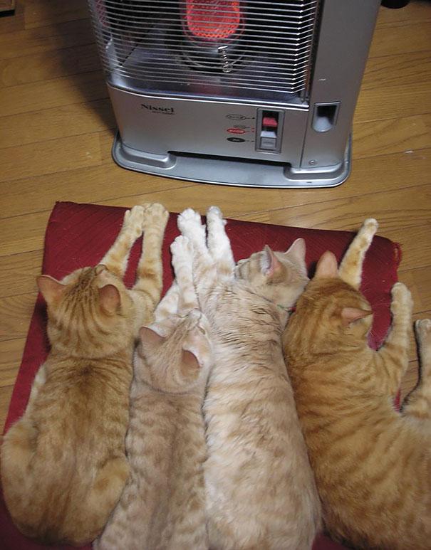 animales buscando calor 13