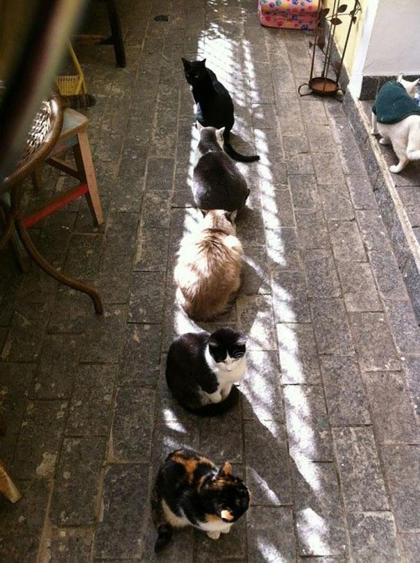 animales buscando calor 18