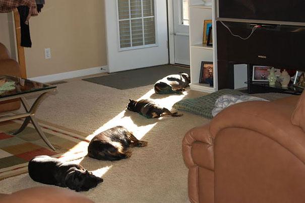 animales buscando calor 2