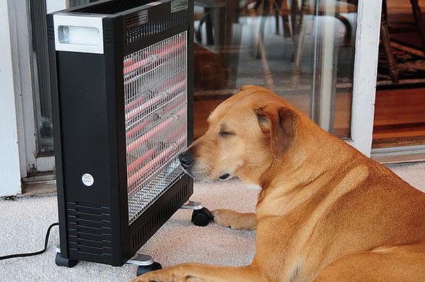 animales buscando calor 25