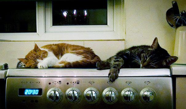 animales buscando calor 27
