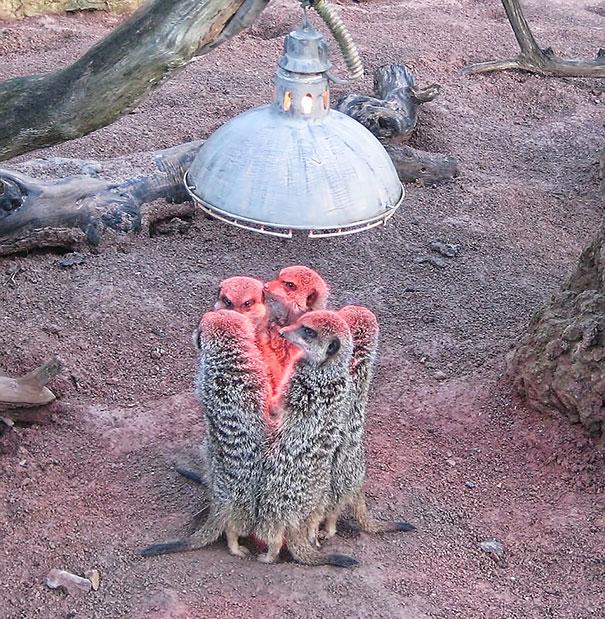 animales buscando calor 3