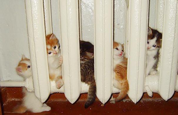animales buscando calor 7