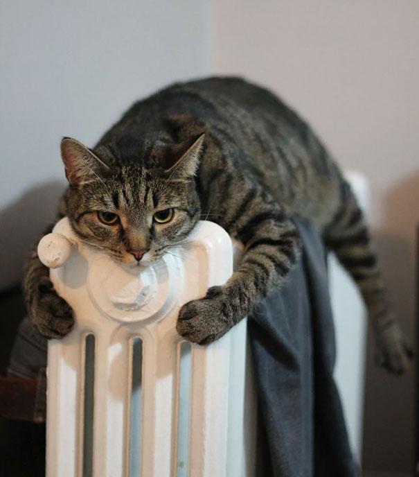 animales buscando calor 8