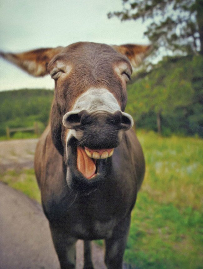 animales sonriendo 11