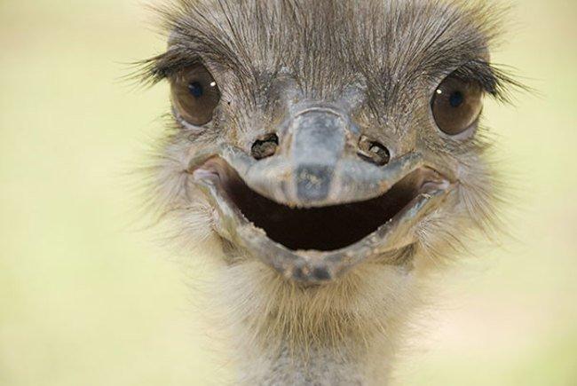 animales sonriendo 15
