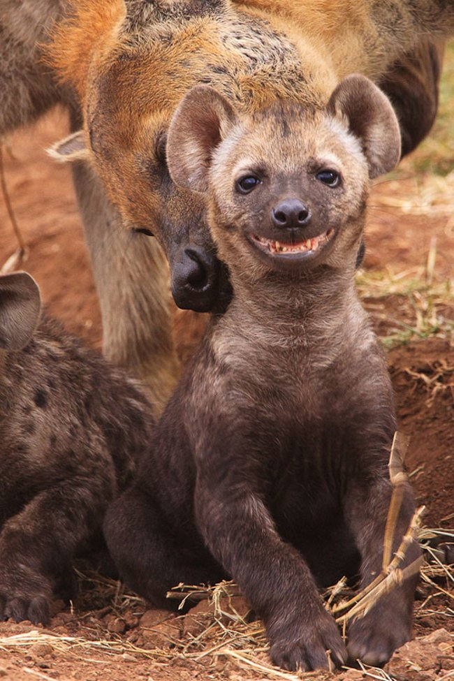 animales sonriendo 16