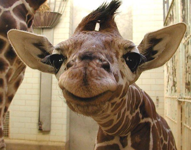 animales sonriendo 19