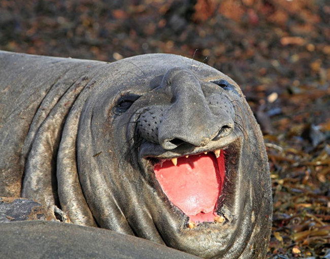 animales sonriendo 27