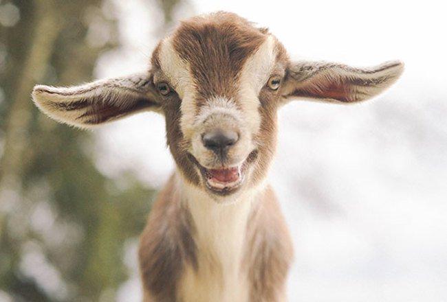 animales sonriendo 28