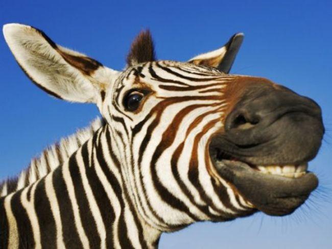 animales sonriendo 31
