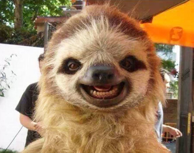 animales sonriendo 6