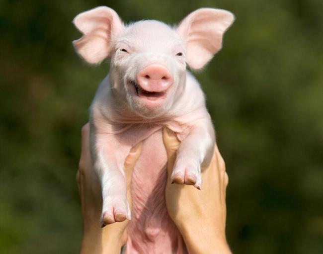animales sonriendo 8