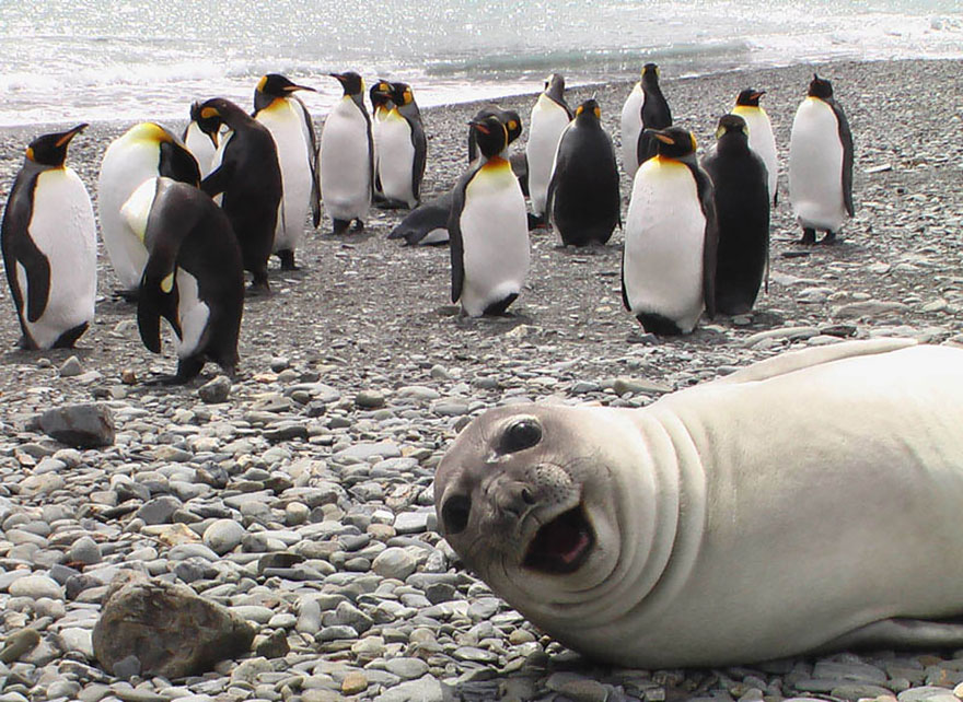 animales_photobombs_1