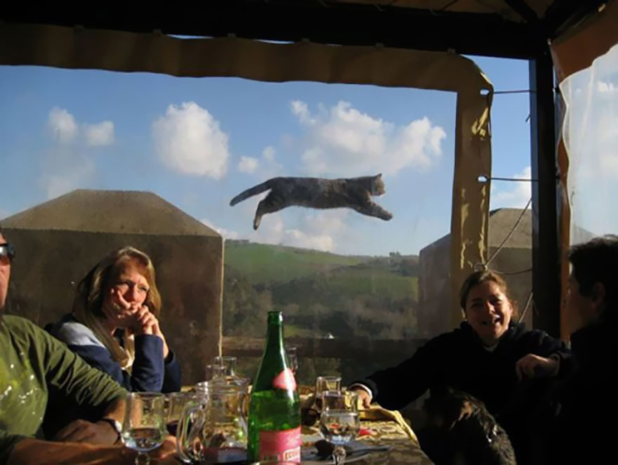 animales_photobombs_13