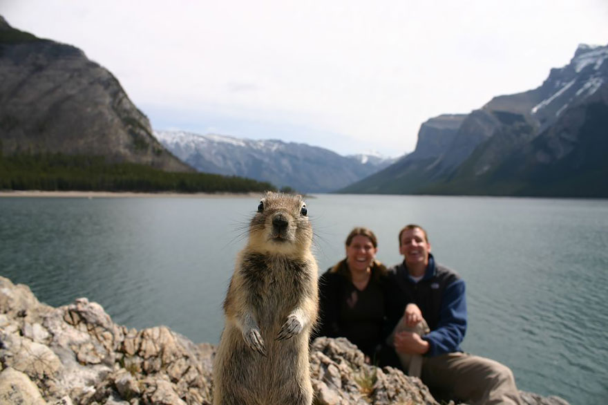 animales_photobombs_2