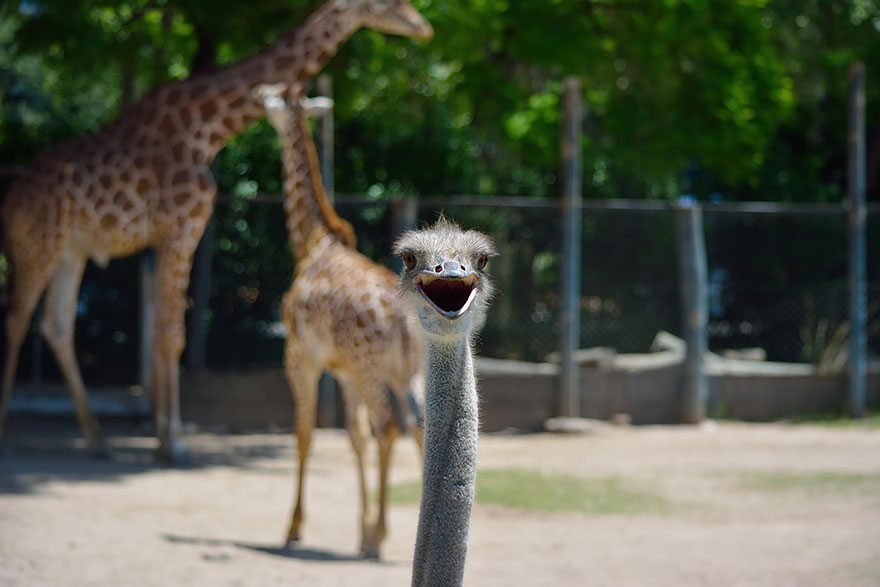 animales_photobombs_25