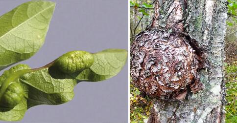 cancer-plantas