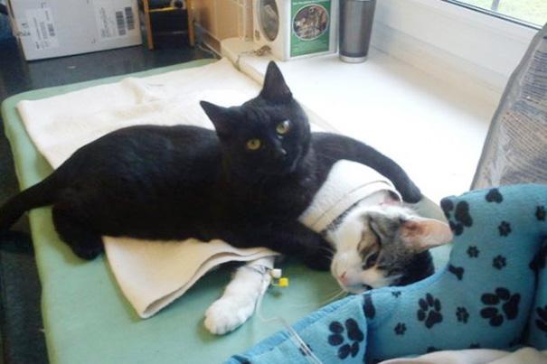 gato enfermero 1
