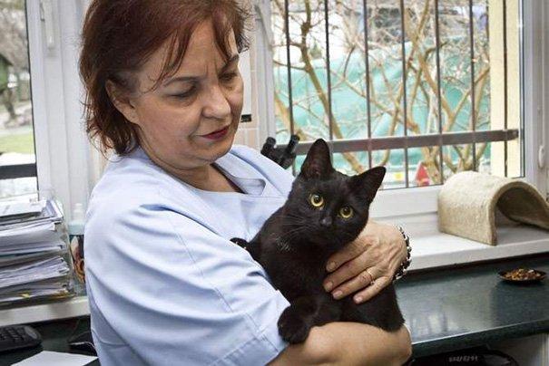 gato enfermero 10