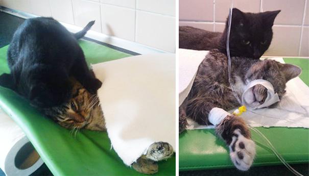gato enfermero 4