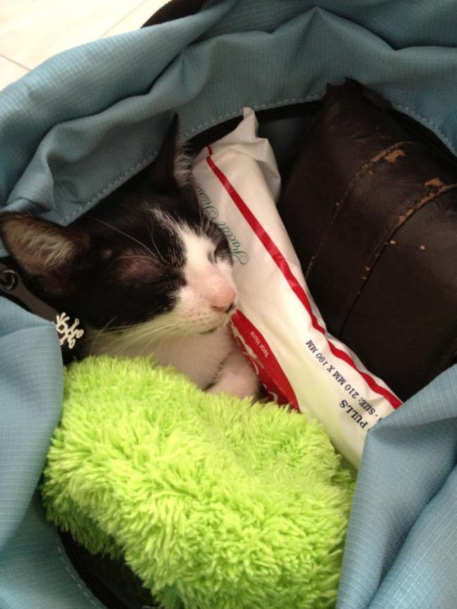 gatos_escondidos_11