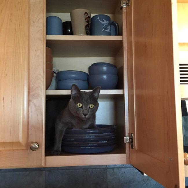 gatos_escondidos_12