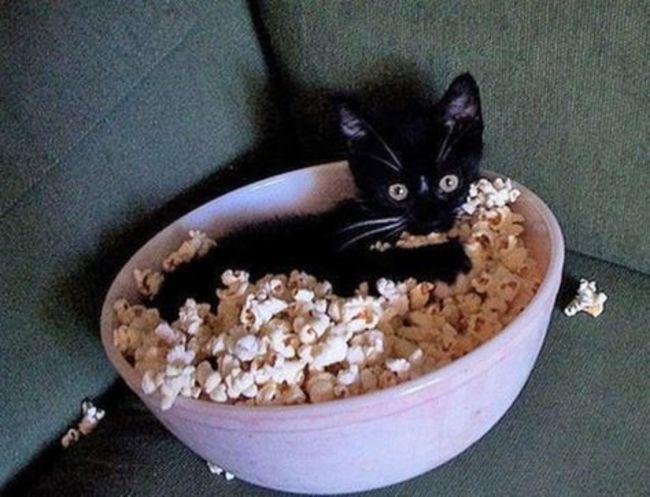 gatos_escondidos_13